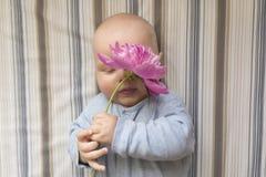 一个小孩子拿着一朵桃红色牡丹花 免版税图库摄影