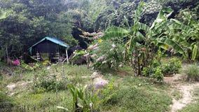 一个小小屋在密林 免版税库存图片