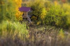 一个小屋在森林里 库存照片