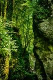 一个小峡谷在森林里 免版税库存照片