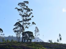 一个小教堂在开放地面的一棵巨大的高大的树木下反对明亮的天空 免版税库存图片