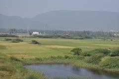 一个小池塘看起来绿色稻的农场的边令人敬畏 免版税库存照片
