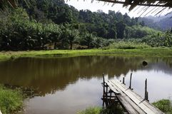 一个小湖在密林 库存照片