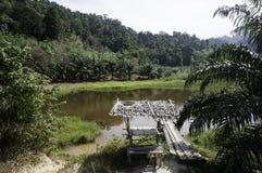 一个小湖在密林 库存图片
