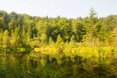 一个小湖在森林里 免版税库存图片
