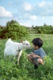 一个小男孩佩带被剥离的背心蹲坐的和谈话对在草坪的一只白色山羊农场的他们看彼此attentivelyA 免版税图库摄影