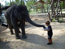 一个小男孩和婴孩elefant在泰国 免版税库存图片