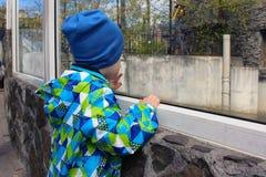 一个小男孩在动物园里 库存图片