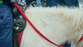 一个小男孩的全景乘坐白色小马 股票录像