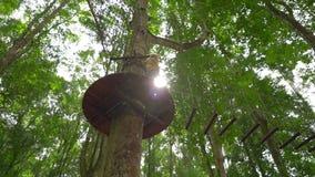 一个小男孩的慢动作射击安全带的在树梢的一条路线上升在森林冒险公园 他上升 股票录像