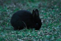 一个小的兔宝宝在家庭公园 免版税库存照片