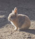 一个小的兔宝宝坐在阳光下 图库摄影