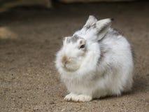 一个小的兔宝宝坐在阳光下 免版税库存照片