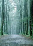 一个小的密林 免版税库存图片