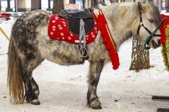 一个小的小马等待 库存照片