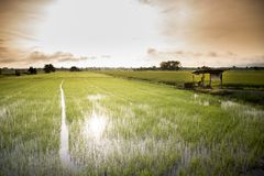 一个小的村庄在茉莉花农场 免版税库存照片
