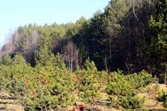 一个小的森林在春天的维尔纽斯市 库存图片