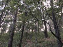 一个小的看法到森林里 库存照片