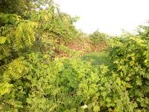 一个小的谷在西非 库存照片