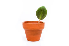 一个小的陶瓷罐的绿色植物 库存照片
