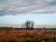 一个小组与天空蔚蓝的在Tiszabà ¡ bolna,匈牙利附近的树和couds 图库摄影