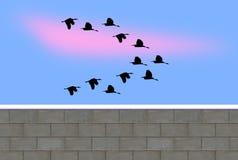一个小组在冬时的飞行鸭子 免版税图库摄影