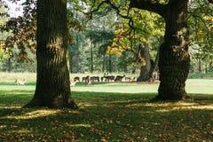 一个小组幼小鹿通过一个温暖的绿色晴朗的草甸走在森林里在树旁边 库存图片