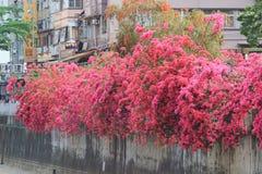 一个小组明亮的红色九重葛花 免版税图库摄影