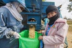 一个小组泰国农夫使用一个机器分离米仁, 图库摄影