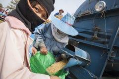 一个小组泰国农夫使用一个机器分离米仁, 库存图片