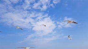 一个小组海鸥在背景中飞行反对风,天空 股票录像