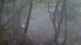 一个小组游人审阅阴沉的有雾的森林 股票视频
