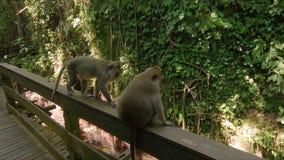 一个小组的慢动作射击短尾猿猴子在一个热带公园 影视素材