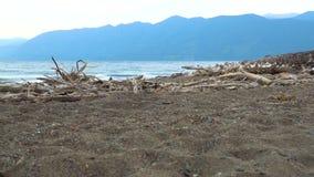 一个小组马沿山湖的含沙岸走 影视素材