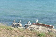 一个小组鸥坐一个砖墙的废墟在岸和海的边界的 免版税图库摄影