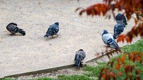 一个小组鸽子 免版税库存照片