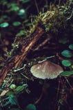 一个小蘑菇在森林里 免版税库存照片
