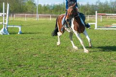 一个小车手训练在跑马场的绿草的一匹马 免版税库存照片