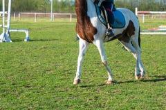 一个小车手训练在跑马场的绿草的一匹马 免版税图库摄影