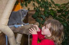 一个小迷人的小女孩使用与两只小的蓬松小猫 图库摄影