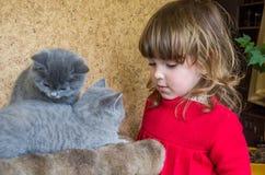 一个小迷人的小女孩使用与两只小的蓬松小猫 库存图片