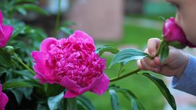 一个小逗人喜爱的婴孩轻轻地享用花的气味 孩子拾起花并且吸入它的芬芳 弄脏 影视素材