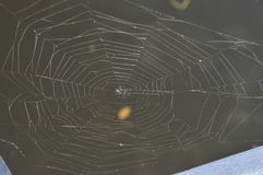 一个小,打破的蜘蛛网的顶视图在一个黑暗,棕色湖的 免版税库存照片