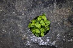 一个小组在岩石的一点绿色生活 免版税库存照片