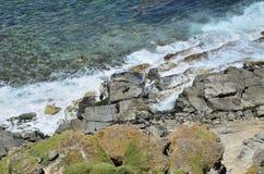 一个小组在岩石的海狮 图库摄影