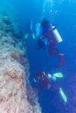 一个小组在珊瑚墙壁附近的潜水者 库存照片