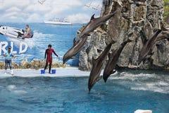 一个小组宽吻海豚进行一跳跃 库存图片