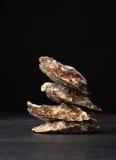一个小组新近地和在黑背景的未加工的被去外皮的牡蛎 变冷的未加工的牡蛎 可口热带海软体动物 免版税库存照片