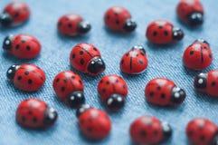 一个小组木瓢虫 免版税库存照片