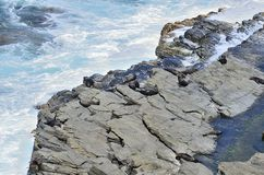 一个小组海狮 库存图片